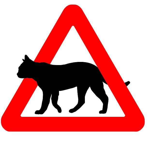 Funny warning road sign cats icon isolated on white picture id532057969?b=1&k=6&m=532057969&s=612x612&w=0&h=74ljylzfpj0ujrmmvvk08t 77ko mxohjx0b ydnnwo=