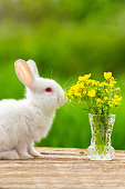 Funny white eared little rabbit on a wooden background with a bouquet of flowers on a Sunny day in nature