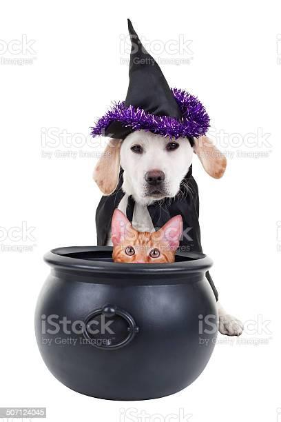 Funny witch dog and cat picture id507124045?b=1&k=6&m=507124045&s=612x612&h=ezdapqggeafyy9kggt fwrlmnzpkhaktzfcciiba4za=