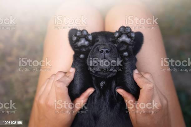 Funny young cute black labrador retriever dog puppy pet with his in picture id1026108168?b=1&k=6&m=1026108168&s=612x612&h=yujrkbh1mo4syensr9fll1f85x 3veq543okkcraevg=