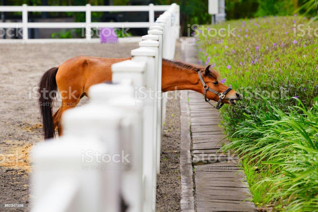 Lustige Junges Pferd Essen Blumen Durch Den Zaun Stock Fotografie