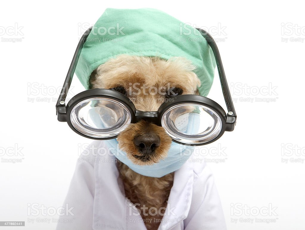 Funny-Looking Furry Doctor with Scrubs royalty-free stock photo