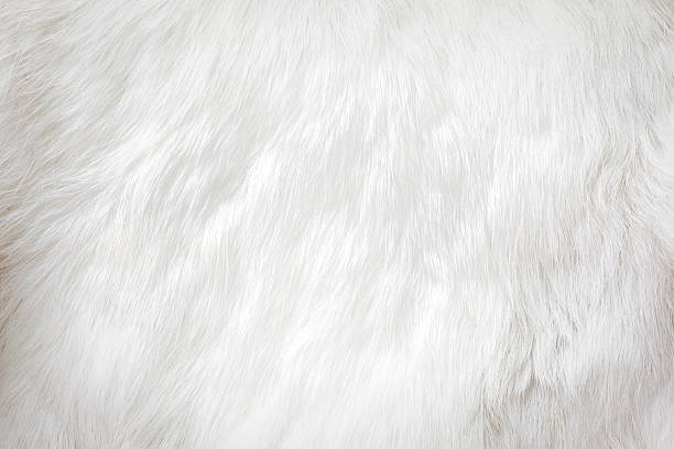 fur background fur background animal hair stock pictures, royalty-free photos & images