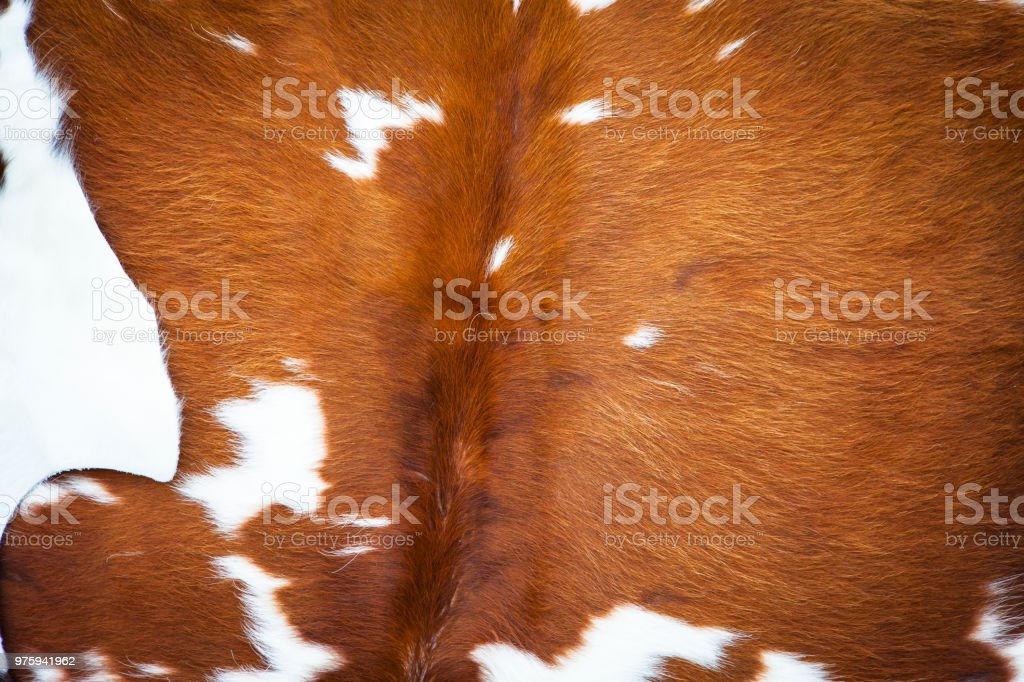Fur cow leather texture background stock photo