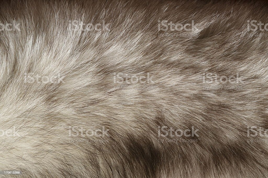 Fur detail stock photo