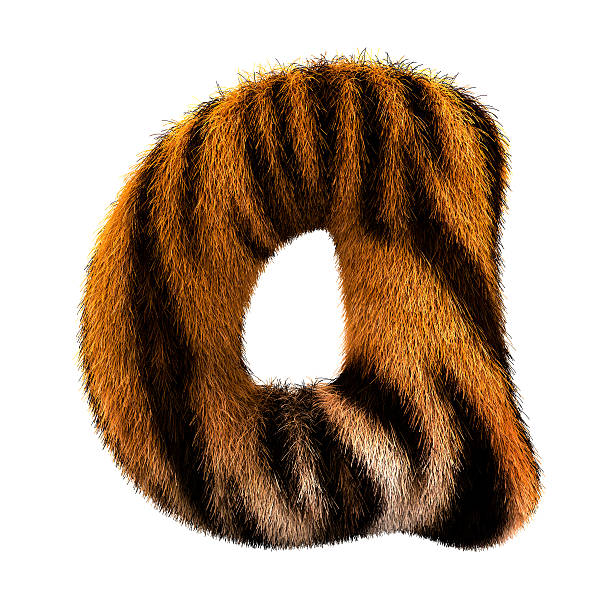 fur letter a - tiger fur stock photos and pictures