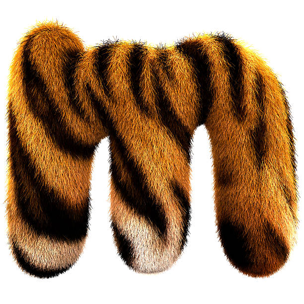 fur letter m - tiger fur stock photos and pictures