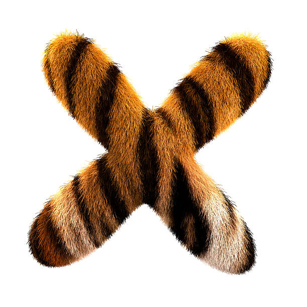 fur letter x - tiger fur stock photos and pictures