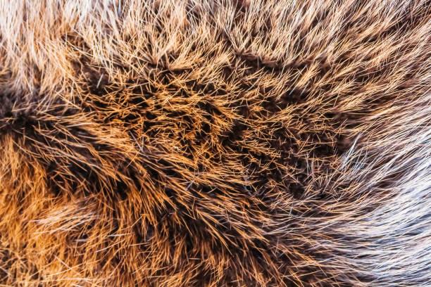 야생 동물의 모피 - 모피 뉴스 사진 이미지