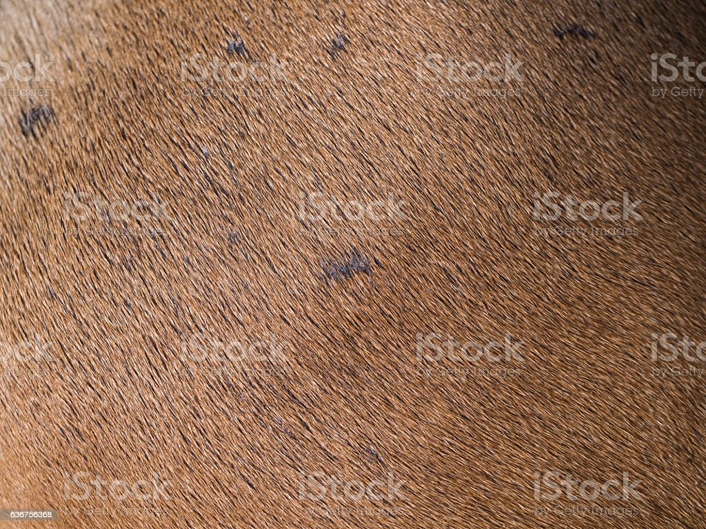 Fur of Brown Dog stock photo