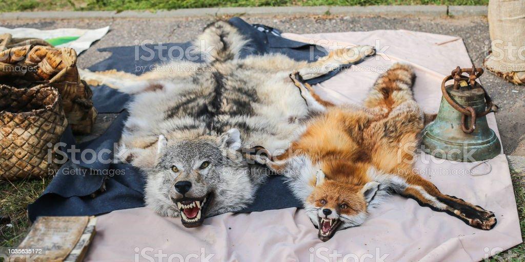 698ee32d45bf pieles de animales sacrificados de lobo y zorro. alfombra para el piso de  una casa