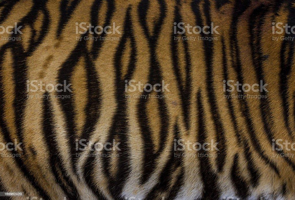 Fur of tiger stock photo