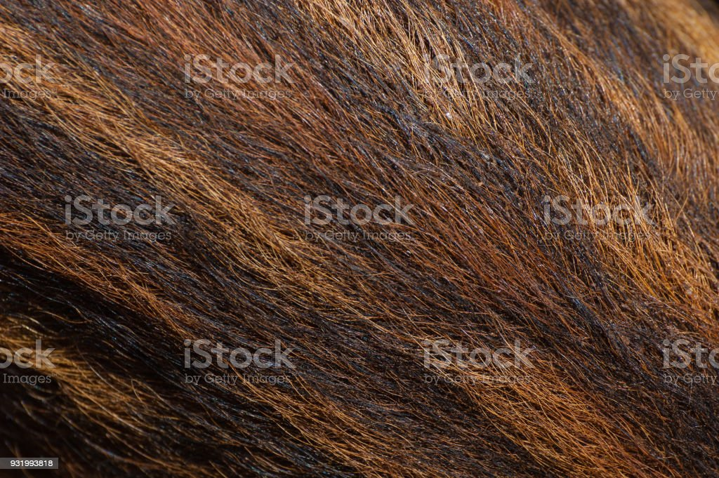 Fur of young wild boar stock photo