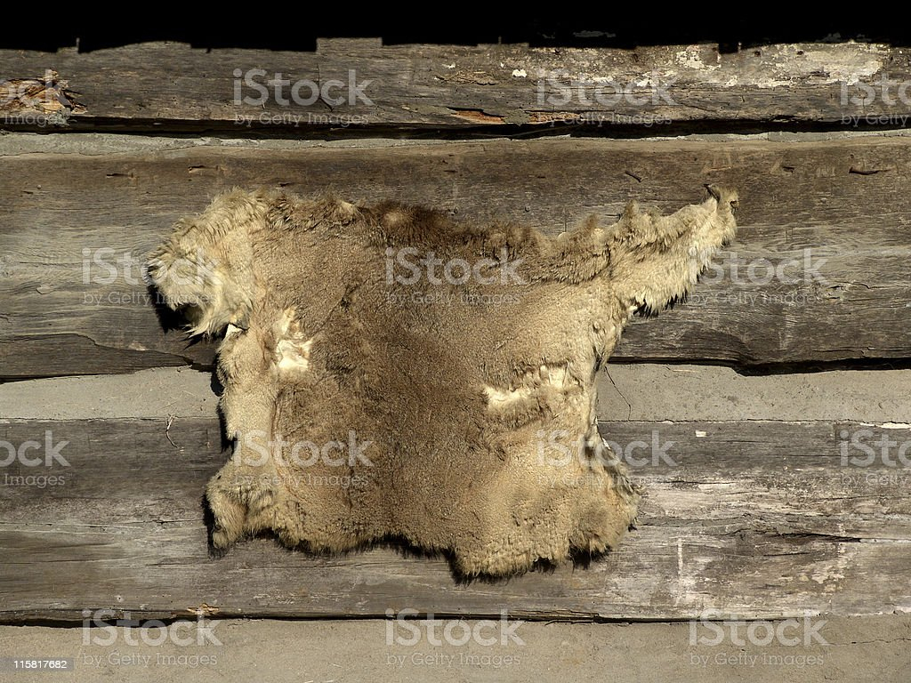 Fur on Cabin Wall royalty-free stock photo