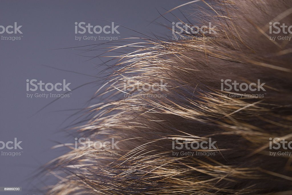 Fur royalty free stockfoto