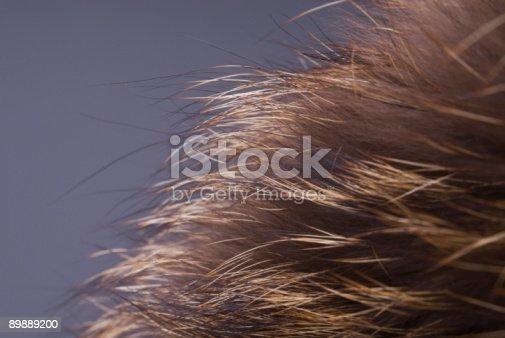 Pelliccia - Fotografie stock e altre immagini di Abbigliamento