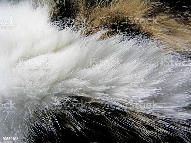 Fur picture id90680492?b=1&k=6&m=90680492&s=612x612&h=j6b3antktllfytp9jn8uythzrlqzoi7jslwdn04n6e4=