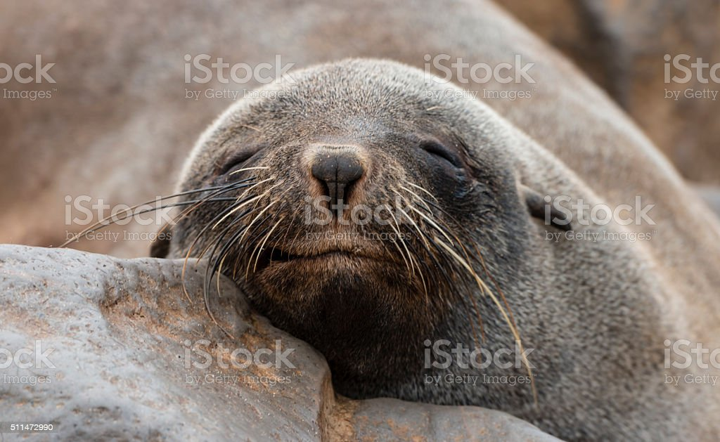 Fur Seal colony at Cape Cross (Namibia) stock photo