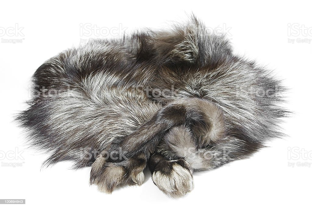 Fur silver fox with arms stock photo
