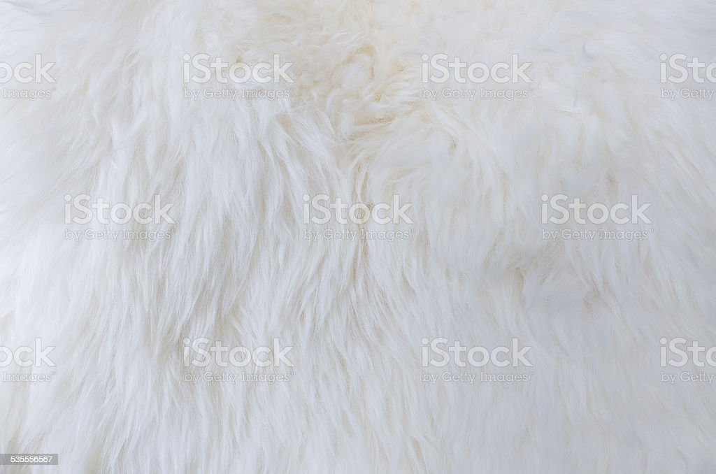 fur texture as background stock photo