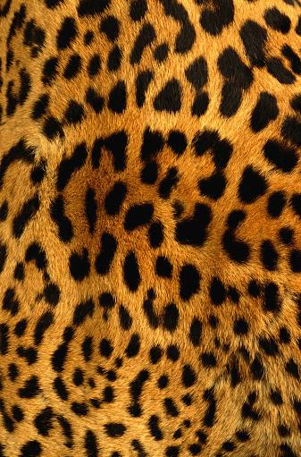 Fur texture leopardo