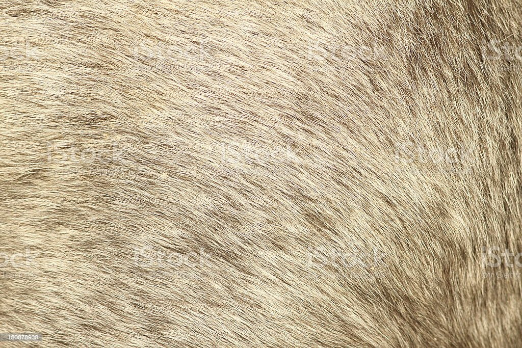 fur texture of a short hair pony royalty-free stock photo