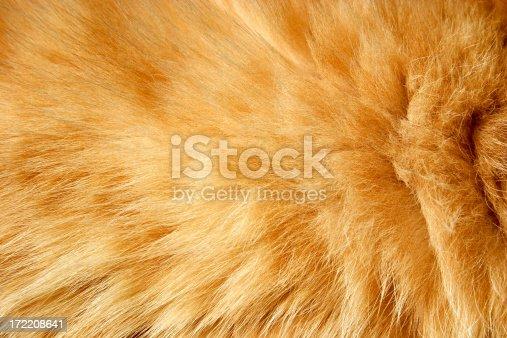 istock Fur texture 172208641