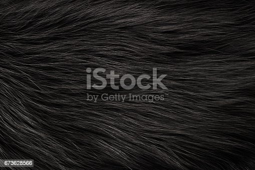 Texture of fox fur with long pile