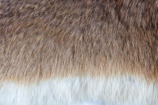 Fur yellow brown rabbit background texture