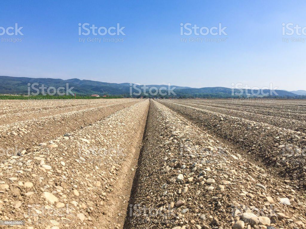 furrows in a agricultural field with blue sky royalty-free stock photo