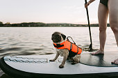 Photo of a cute pug wearing an orange life jacket on a stand-up paddleboard; enjoying the ride with his owner.