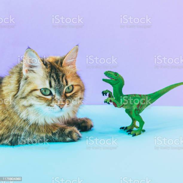 Furry cat and dinosaur on colored background picture id1175904360?b=1&k=6&m=1175904360&s=612x612&h=ke4dmxyqmmnkbnnwtfpv32hsude7abllsm6uca6msas=