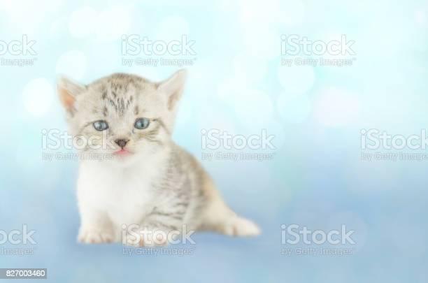 Furry kitten picture id827003460?b=1&k=6&m=827003460&s=612x612&h=sf  q0ooypizplfcmgqrnh ve 1px3 qzx0pvrw9dya=