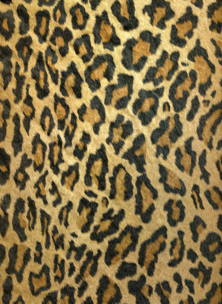 Furry leopard print stock photo