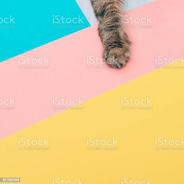 Furry paw of a cat picture id637892658?b=1&k=6&m=637892658&s=612x612&h=wkxjzdktlppsyuf0thn9z4ba4vupg9jf3x13dahftyw=