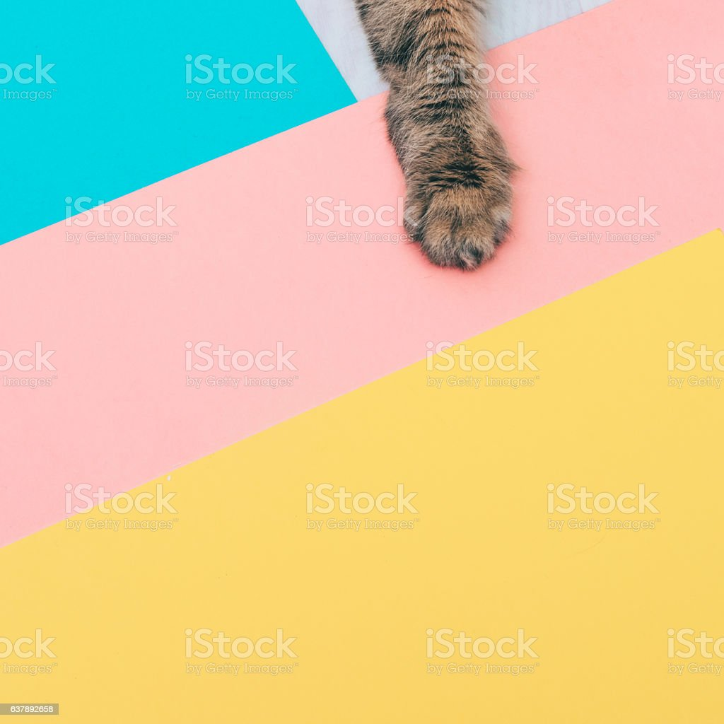 furry paw of a cat stock photo
