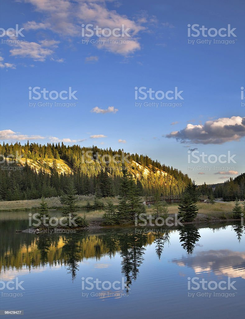 Fur-trees reflected in water. royalty-free stock photo
