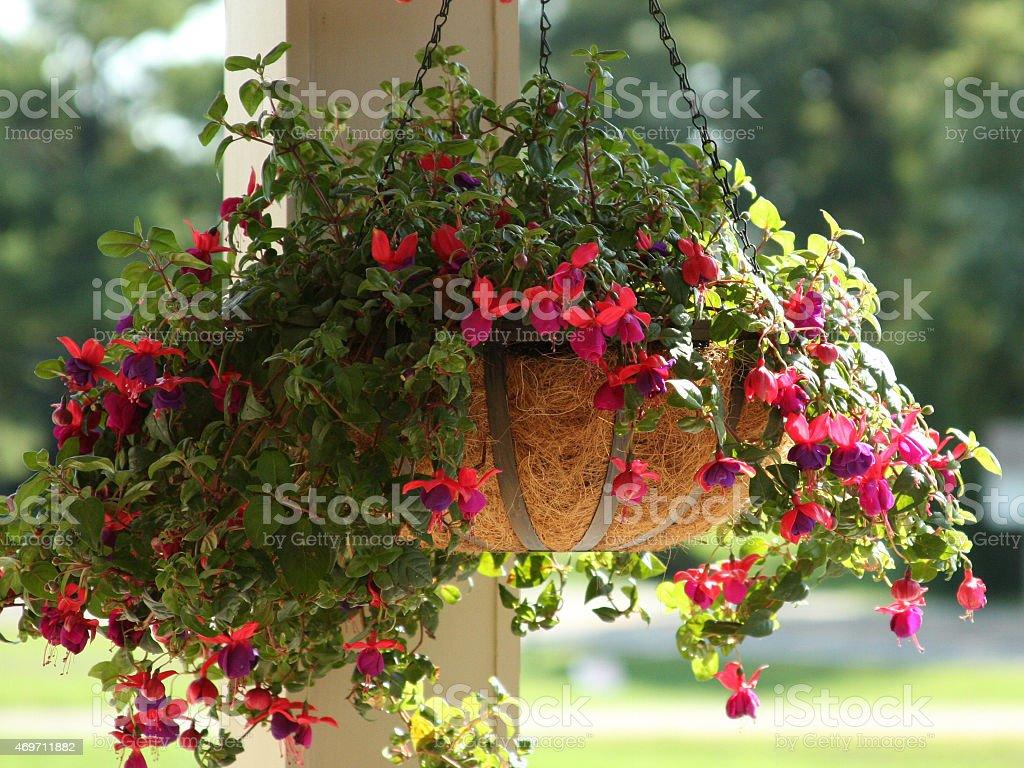 Fuchsie Blumenampel auf Veranda Post – Foto