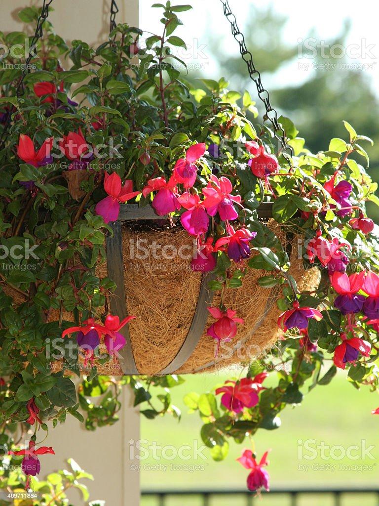 Fuchsie Blumenampel auf Post nahe weitere Zaun – Foto