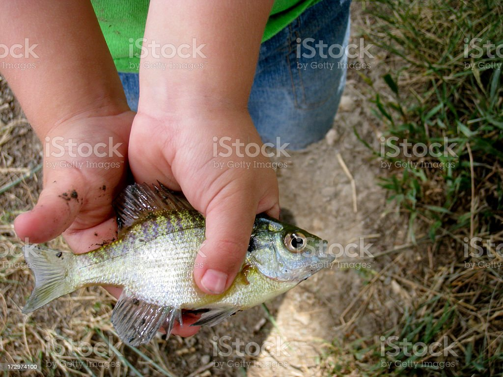 future of fishing lies in their hands stock photo