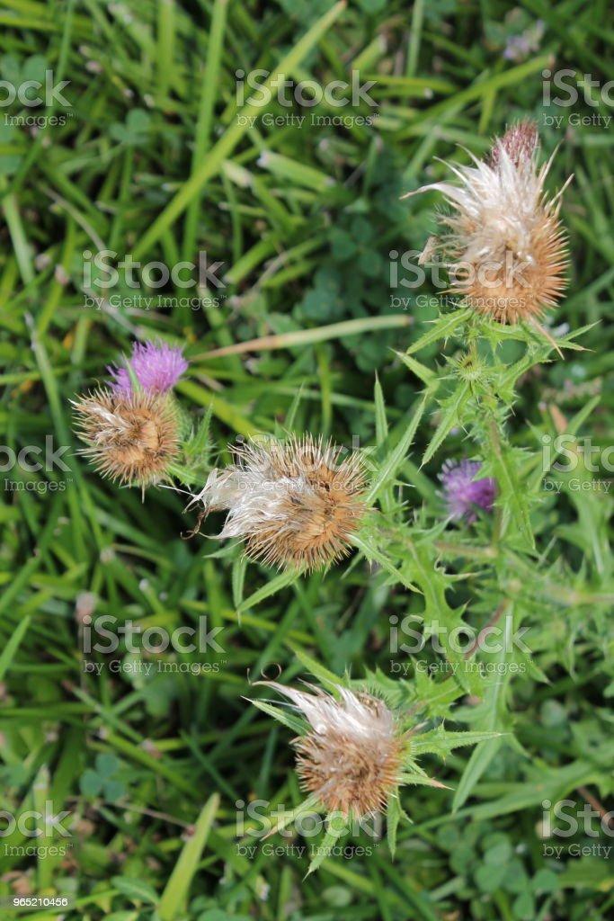 Fuzzy Flower royalty-free stock photo