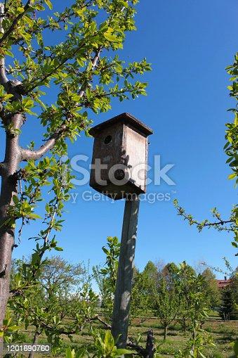 gabbia di legno per uccelli sopra albero
