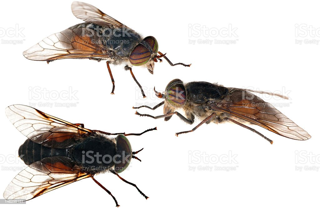 gadfly collection on white stock photo