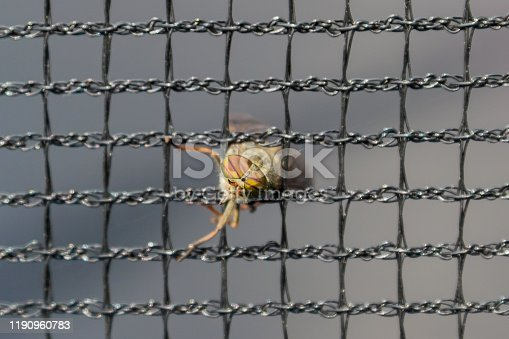 Gadfly stuck in a metal net, head and eyes close-up