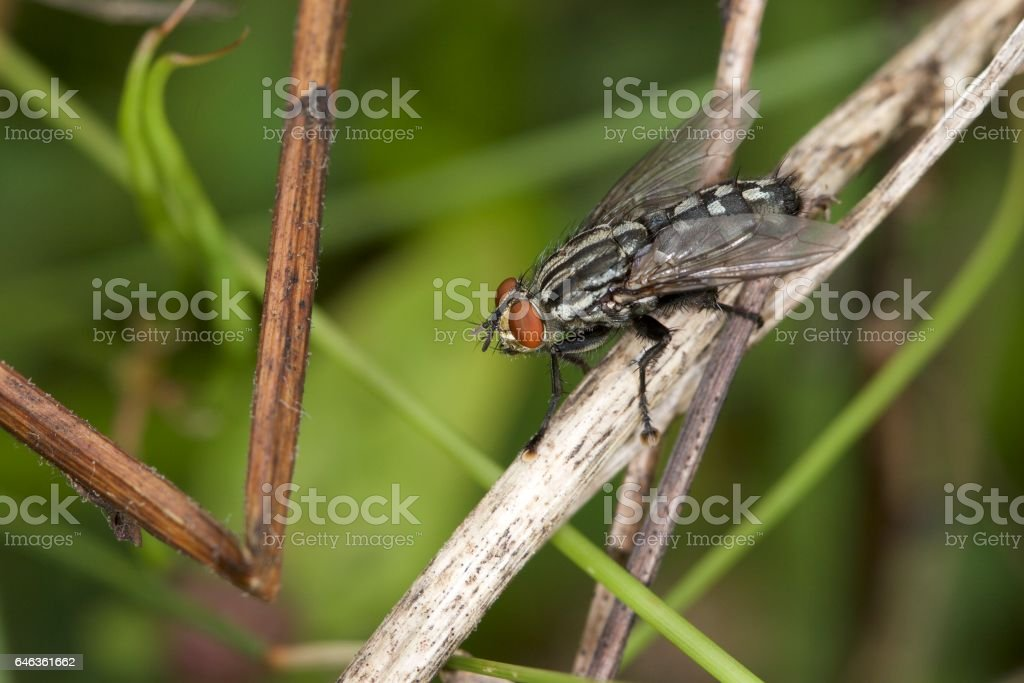 Gadfly on branch stock photo