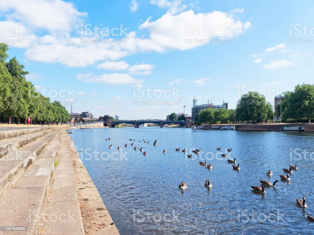 Gaggle of Geese on the Trent stock photo
