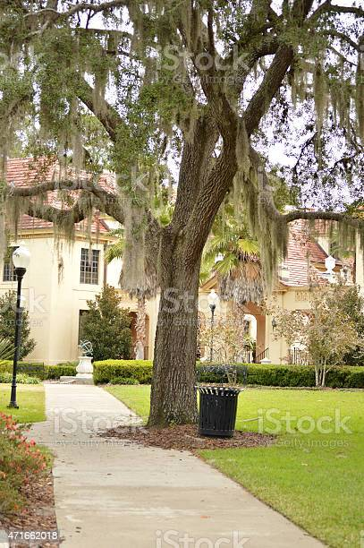 Gainesville, Florida park with oak and trash can