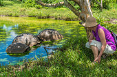 Mature women looking three Galapagos giant tortoise in the pond.