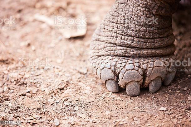 Galapagos giant tortoises foot picture id177848922?b=1&k=6&m=177848922&s=612x612&h=3 dsxg2tpf1qkz ko58y5cuaptyis0yd yc77 1fseg=