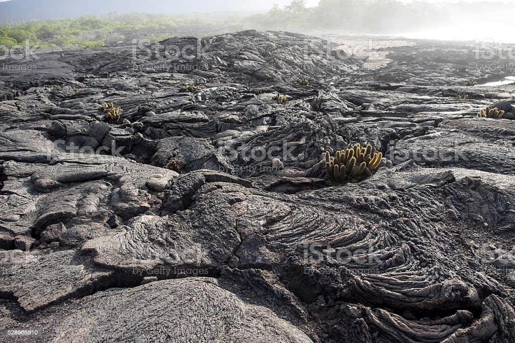 Galapagos Islands lava rocks stock photo